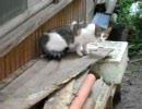 のら猫3匹
