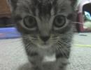 子猫のマロン♪ 完全版 thumbnail