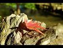 【ニコニコ動画】岡山の紅葉を求めてを解析してみた