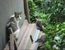 のら猫3匹逃げる・・・