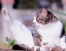 神社の猫5 thumbnail