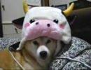 【ニコニコ動画】牛&ローズ&柴犬りょう(09年1月4日)を解析してみた