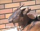 動物たちからひとこと「サーセン」 thumbnail