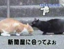 しゃべる猫
