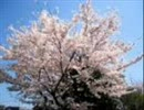 http://tn-skr.smilevideo.jp/smile?i=5996360