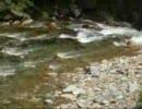 川浦の流れ