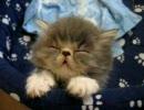 眠すぎてやばいぬこたん