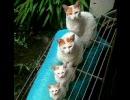 私的ねこ画像集(何か反応したら猫の頭を3回撫でて一生可愛がること)