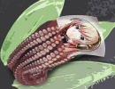【巡音ルカ】 讃えよ!海産物(主にタコを) 【オリジナル】