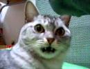 フレーメン反応 - 靴下の臭い編 thumbnail