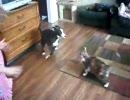 幼女を襲う犬を撃退する猫