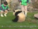 ニートパンダが動かない