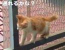 【ニコニコ動画】子猫の冒険 進めない、戻れない(セリフ付き)を解析してみた