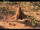 【ニコニコ動画】昆虫大戦争! 1/6を解析してみた