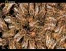 【ニコニコ動画】昆虫大戦争! 3/6を解析してみた