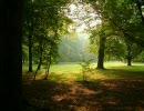 【ニコニコ動画】【作業用BGM】 静かな森のピアノを解析してみた
