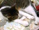 ネコが寝てるのにシッポだけ起きたんです!><;