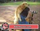 女性とセックスと犬 thumbnail
