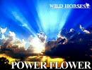 『POWER FLOWER』 『WILD HORSES』 オリジナル曲2 thumbnail