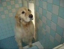 【ニコニコ動画】新COCOちゃんのシャワータイムを解析してみた