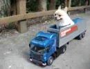 第24位:愛犬をラジコンに乗せて走らせてみた thumbnail