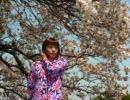★43  桜舞う  「 港の見える丘公園 」