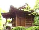 香川県白峰寺の花吹雪
