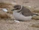 【ニコニコ動画】各都道府県の県鳥を解析してみた