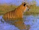 【ニコニコ動画】「トラ」の2を解析してみた