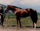 20世紀の名馬 第82位 コダマ