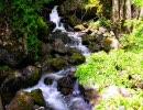 【ニコニコ動画】【作業用BGM】小川のせせらぎ【自然】を解析してみた
