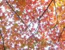 空蝉-ウツセミ-