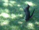 【猫】遊んでよし、食べてよし 2【鳥】