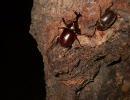 【初心者向】夏の雑木林で昆虫採集【樹液採集】