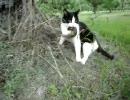 猫、リスを捕獲。