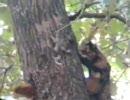 木の上のリスを猫が狙う。