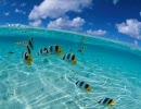 第19位:水面や水中の画像が怖い(エコノミー回避版) thumbnail