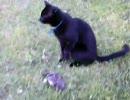 黒猫さん、鳥と戯れる。