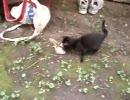 子猫が鳥を捕まえる。