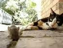 猫、さりげなくネズミを捕らえる
