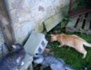 おや、猫たちがリスを・・