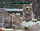 手羽先を独り占めする子猫