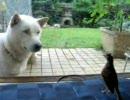 ひばりと紀州犬