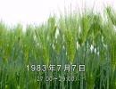谷山浩子のオールナイトニッポン 1983年07