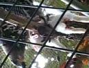 鳥(猛禽)がウサギを食べている、動物園で