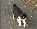 【ニコニコ動画】船と猫が好きな私が田代島へ行ってみた 前編を解析してみた