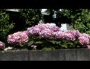 【ニコニコ動画】バイクで北海道目指してみた Part.52を解析してみた