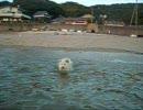 泳げ正ちゃん