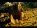 【ニコニコ動画】究極の毒蛇 (2/2)を解析してみた