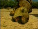 検証!肉食恐竜 ヴェロキラプトル編 その3